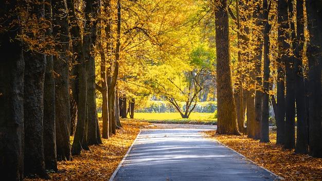 Parque outono em tempo ensolarado. folhas de outono amarelas em um parque da cidade.