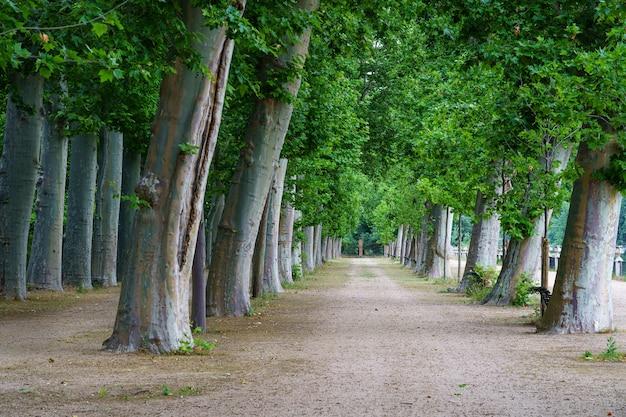 Parque público com grandes árvores e estradas de terra para caminhadas
