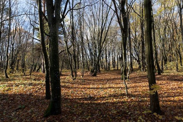 Parques de outono para passeios em que crescem árvores caducifólias com folhas caídas, a folhagem seca cobre o território da paisagem do parque.