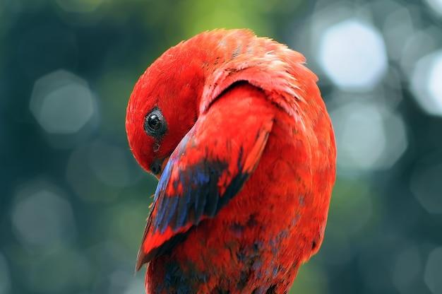 Parrot macaw parrots bird