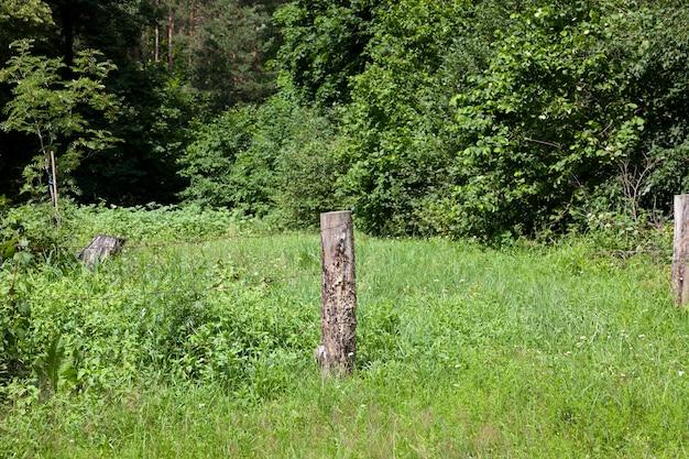 Parte da velha cerca de madeira com arame farpado