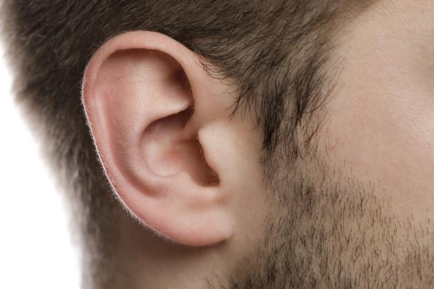 Partes do corpo. close da orelha masculina.