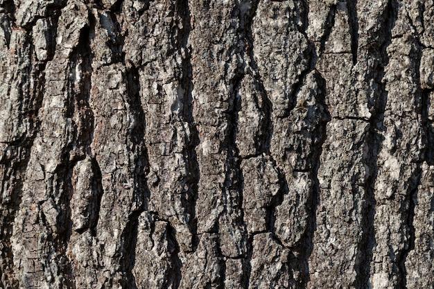 Partes do tronco da árvore com casca para proteção