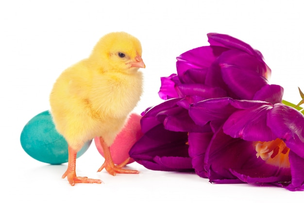 Páscoa com filhotes, ovos e flores