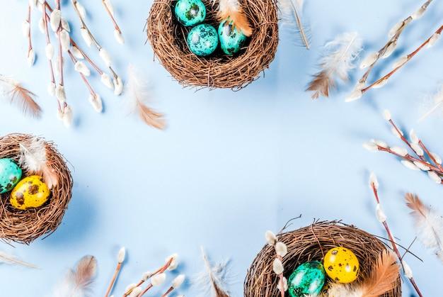 Páscoa com ninhos de pássaros, com ovos e flores da primavera salgueiro, moldura azul vista superior