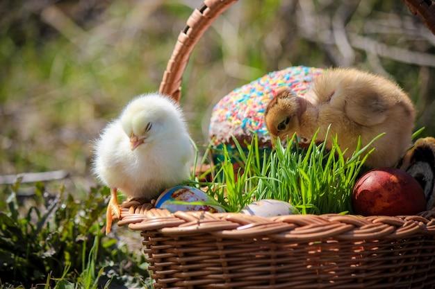 Páscoa. decorações de páscoa em uma cesta. primavera. foco seletivo.