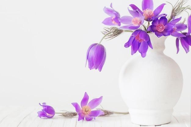 Pasque-flor em um vaso no fundo branco