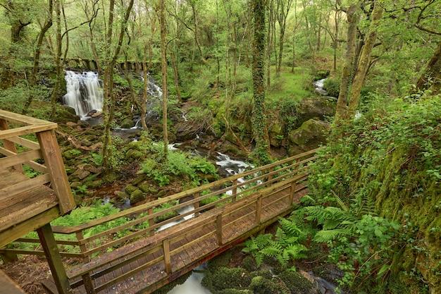 Passadiços de madeira às margens do rio arenteiro, na região da galiza, espanha.