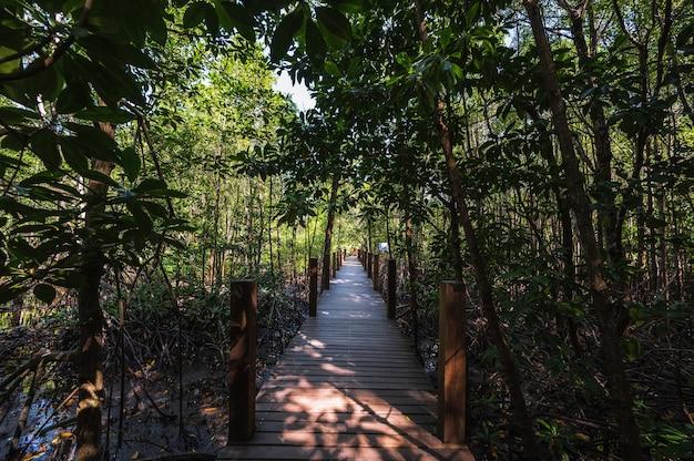Passagem da ponte de madeira na baía de kung krabaen floresta de manguezais na cidade de chanthaburi na tailândia.