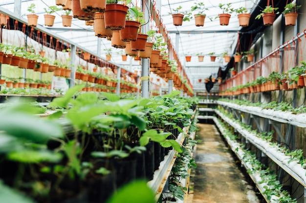 Passagem interior de um viveiro de plantas