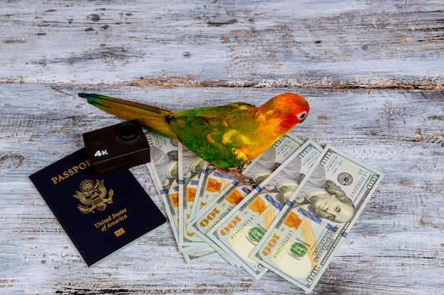 Passaporte da câmera e dinheiro do papagaio para férias no fundo da madeira da estrela de mar