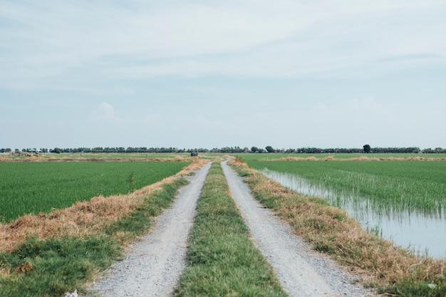 Passarela ao campo de arroz na tailândia