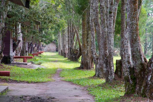 Passarela com árvore, beleza natureza cena