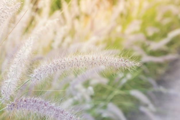Passarela com grama ao lado do caminho na colina