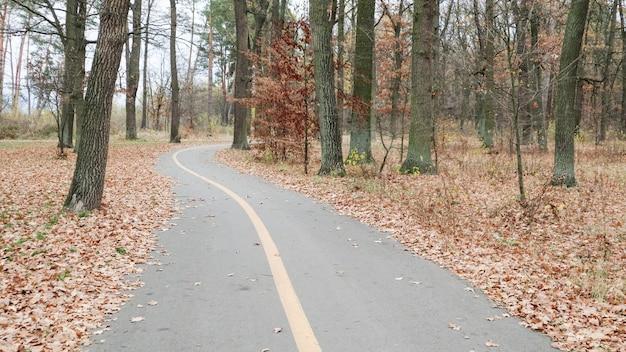 Passarela no parque com uma linha de marcação amarela no asfalto. ao fundo, árvores e arbustos já apresentam folhas amarelas e laranja. tempo quente, dia de sol. parque vazio de outono sem pessoas.