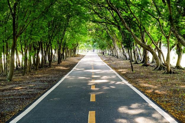 Passarelas com árvores em parques públicos