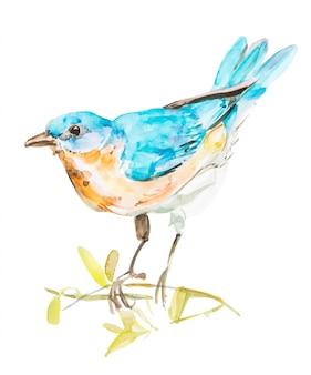 Passarinho azul, pintura em aquarela de mão