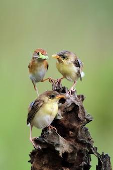 Pássaro alimentando seus filhotes