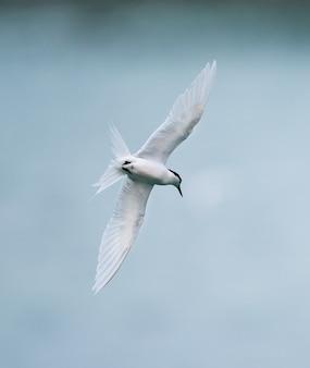 Pássaro andorinha voando sobre o mar