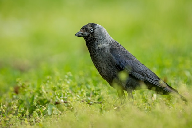 Pássaro animal preto pássaro e corvo
