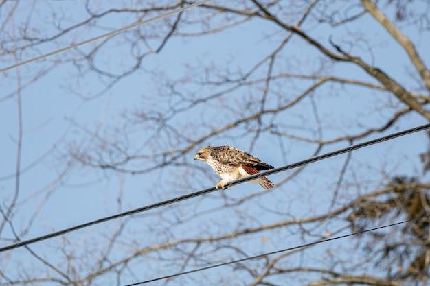 Pássaro ao ar livre