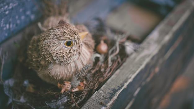 Pássaro artificial e ninho de pássaro
