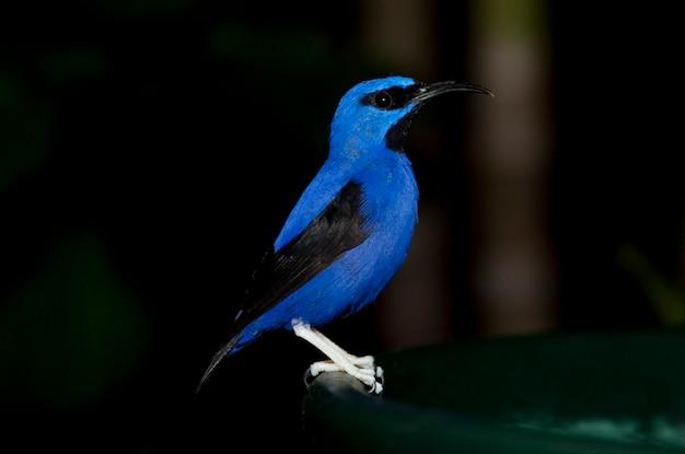 Pássaro azul no palácio das borboletas em branson, missouri