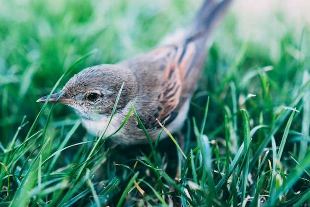 Pássaro bonito sentado na grama