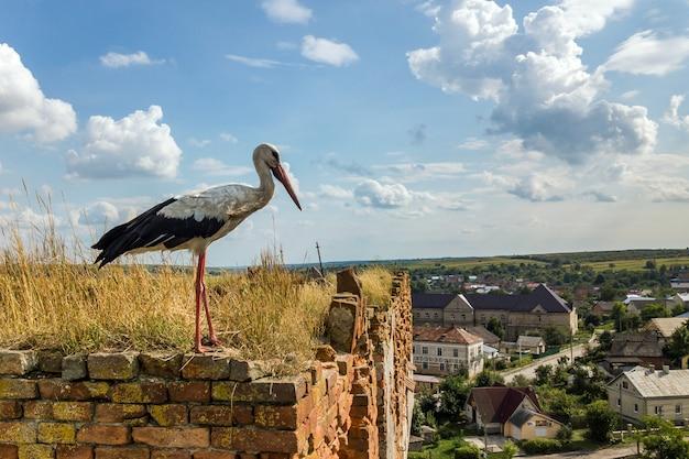 Pássaro branco e preto da cegonha que está em um edifício arruinado velho no verão.
