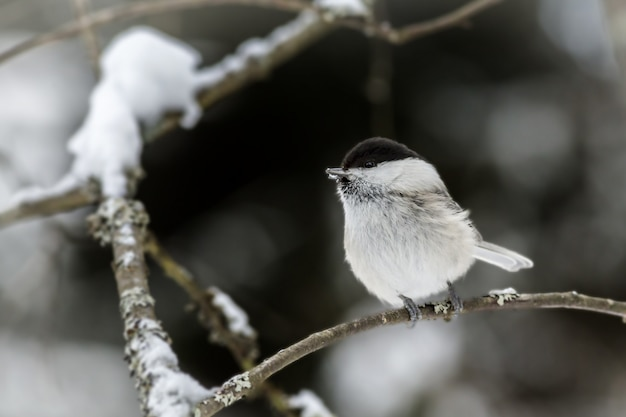 Pássaro branco e preto em galho de árvore