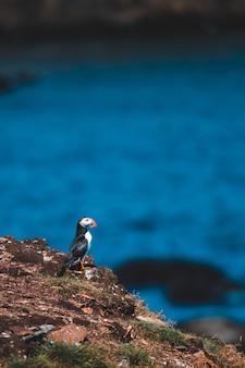 Pássaro branco e preto no penhasco durante o dia