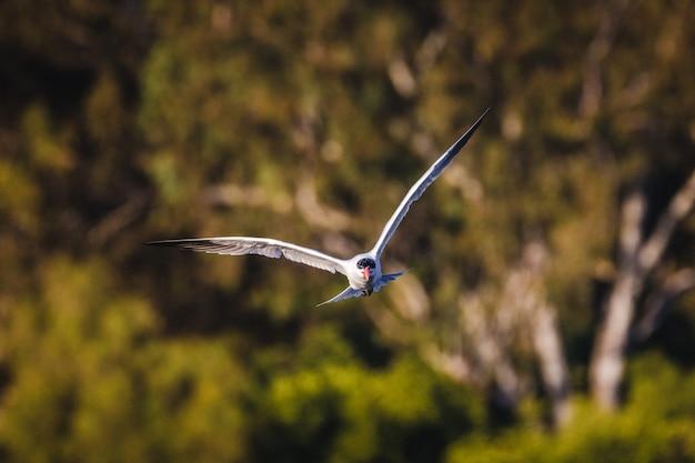 Pássaro branco e preto voando durante o dia