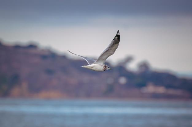 Pássaro branco e preto voando sobre o mar durante o dia