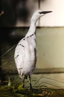Pássaro branco em cerca de madeira marrom