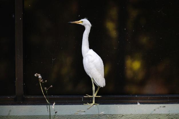 Pássaro branco em cerca de metal preto durante a noite