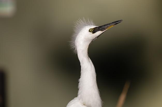 Pássaro branco em close-up