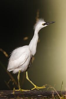 Pássaro branco em suporte de metal amarelo