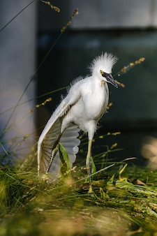 Pássaro branco em uma vara de madeira marrom