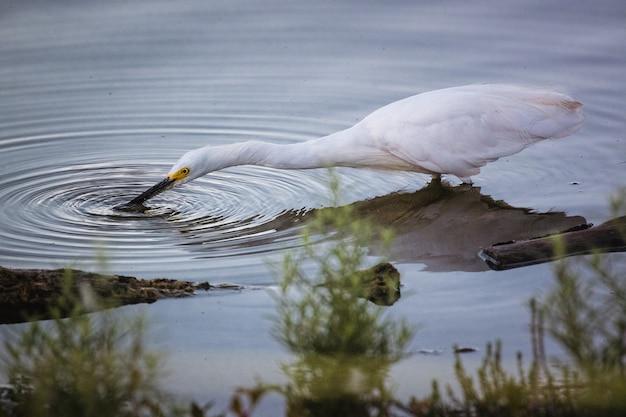 Pássaro branco na água durante o dia