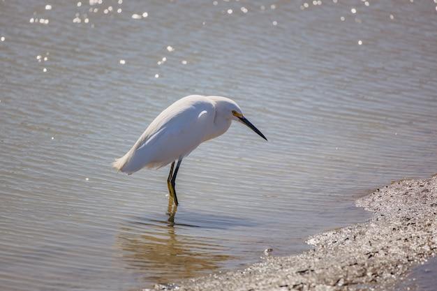 Pássaro branco na areia marrom perto do corpo d'água durante o dia