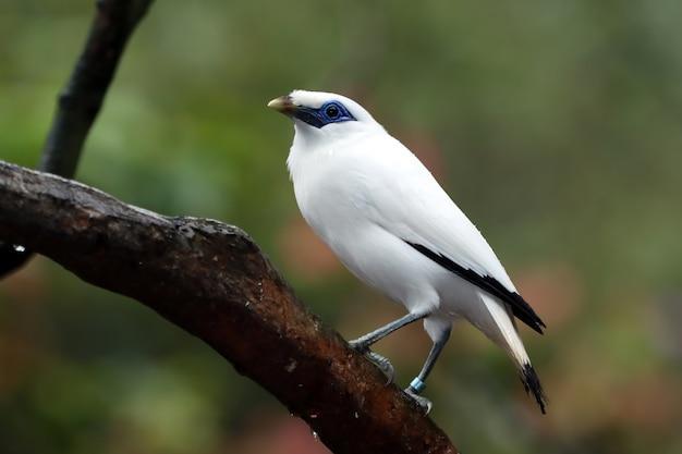 Pássaro branco na árvore