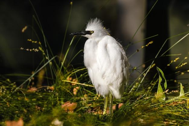Pássaro branco na grama verde durante o dia
