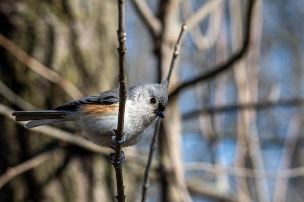 Pássaro cinza sentado no galho de uma árvore