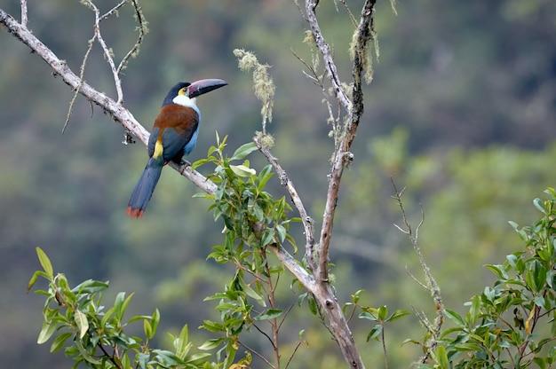 Pássaro colorido descansando pacificamente em um galho