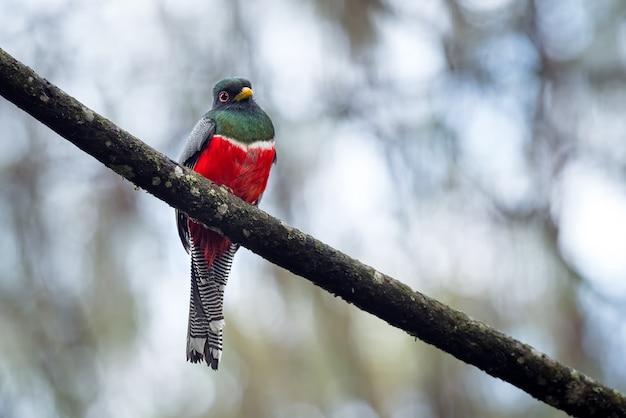Pássaro colorido e lindo empoleirado em um galho de árvore diagonal