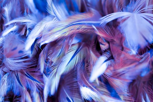 Pássaro colorido e penas de galinha em estilo suave e borrão para o fundo