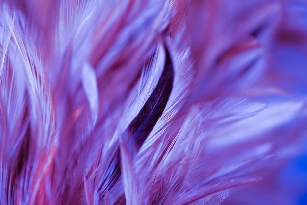 Pássaro colorido e penas de galinha em suave e estilo de desfoque para o fundo, arte abstrata