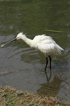 Pássaro com bico longo
