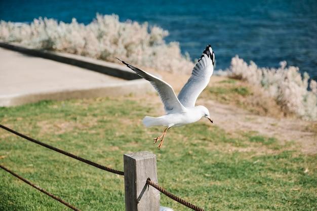 Pássaro começa a voar