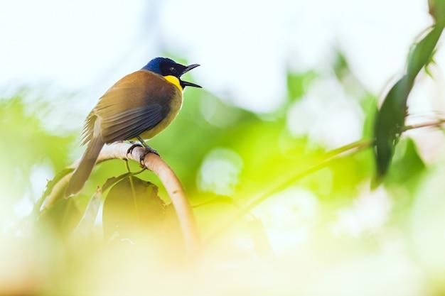 Pássaro comedor de abelha animal e tentilhão